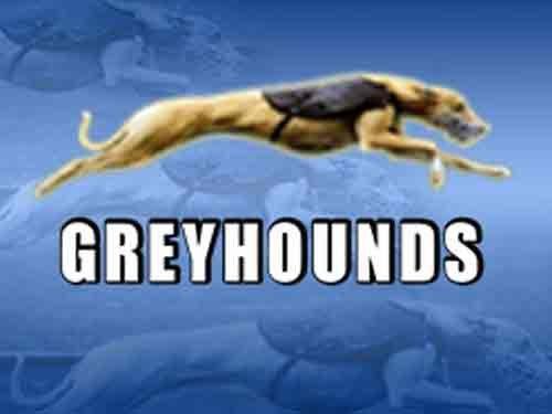 Bomba Greyhounds