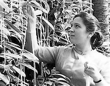 GP_spaghetti-tree-bbc.jpg